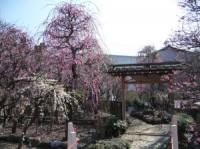 香梅園の写真