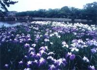 桑名城跡九華公園