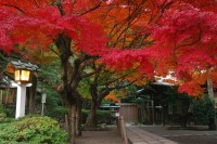鎌倉宮(大塔宮)の写真