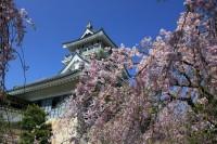 小山城の写真