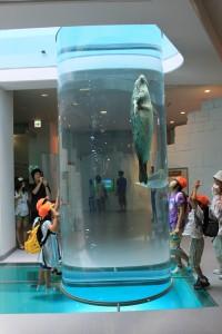 日本平動物園の写真