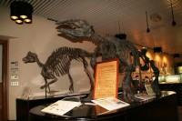 北海道大学総合博物館の写真