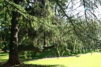 北海道大学薬学部附属薬用植物園の写真