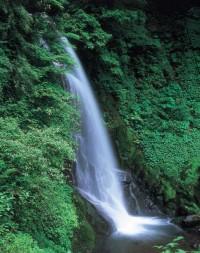 一乗滝の写真