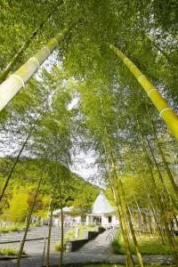 合馬竹林公園