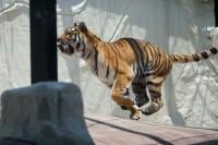 福岡市動植物園の写真