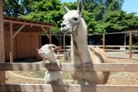 宝登山小動物公園の写真