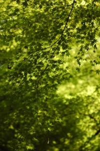 春日山原始林の写真