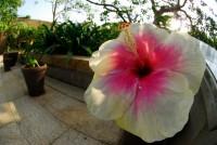 国営沖縄記念公園の写真