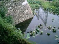 淀城跡の写真