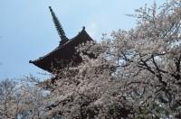 法華経寺(中山鬼子母神)