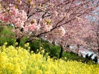 松田山ハーブガーデン(西平畑公園)の写真