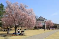 甲府城(舞鶴城公園)の写真