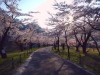 中部電力の桜公園の写真