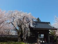 谷厳寺の写真
