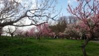 平岡公園梅林