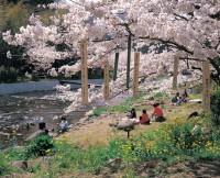那賀川堤の写真