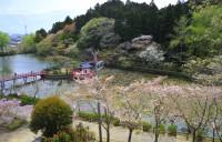 茂原公園の写真