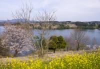 大分農業文化公園の写真