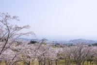 扇山さくらの園の写真