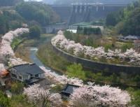 耶馬溪ダム記念公園「溪石園」の写真