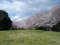 佐鳴湖公園の写真