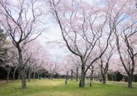 千葉市昭和の森の写真