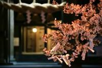 肥後一の宮阿蘇神社