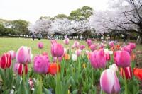 神奈川の写真