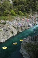 鯉のぼり 秘境大歩危峡を泳ぐの写真