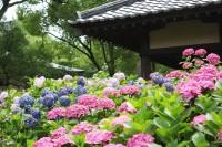 藤森神社の写真