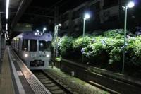 井の頭線 東松原駅アジサイライトアップの写真