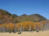 光徳牧場の写真