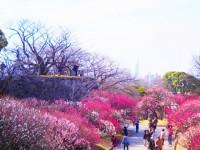 舞鶴公園(福岡)の写真