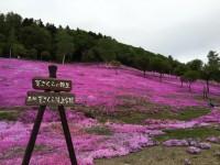 芝ざくら滝上公園の写真
