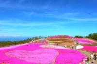 茶臼山高原の写真