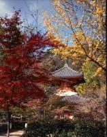 三瀧寺多宝塔(広島)