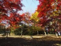 紅葉山公園(群馬)