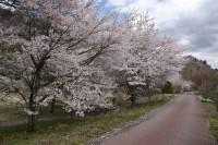 吾妻川自然遊歩道(新巻遊歩道)