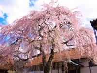 極楽寺(鳥取)