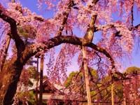 東漸寺の写真