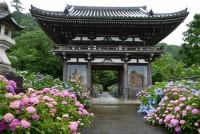 丹州華觀音寺(丹波あじさい寺)
