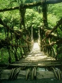 奥祖谷二重かずら橋の写真