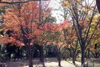 県立保土ヶ谷公園の写真