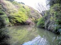 瀬上市民の森