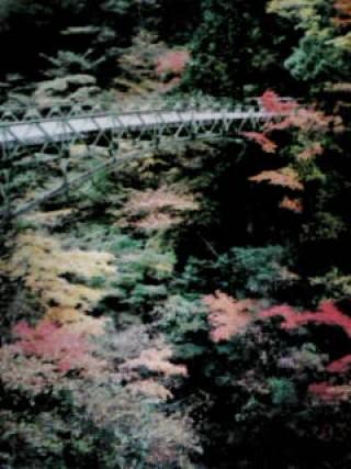 面河渓の写真
