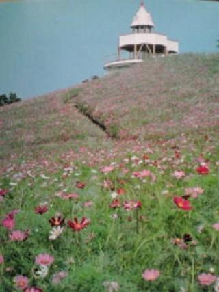 翠波高原の写真