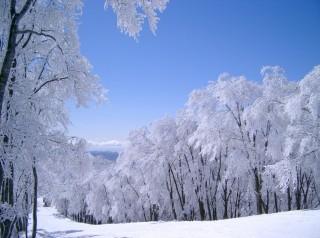 白馬コルチナスキー場の写真