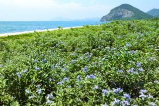 有明浜の写真