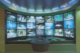 島根県立宍道湖自然館ゴビウスの写真